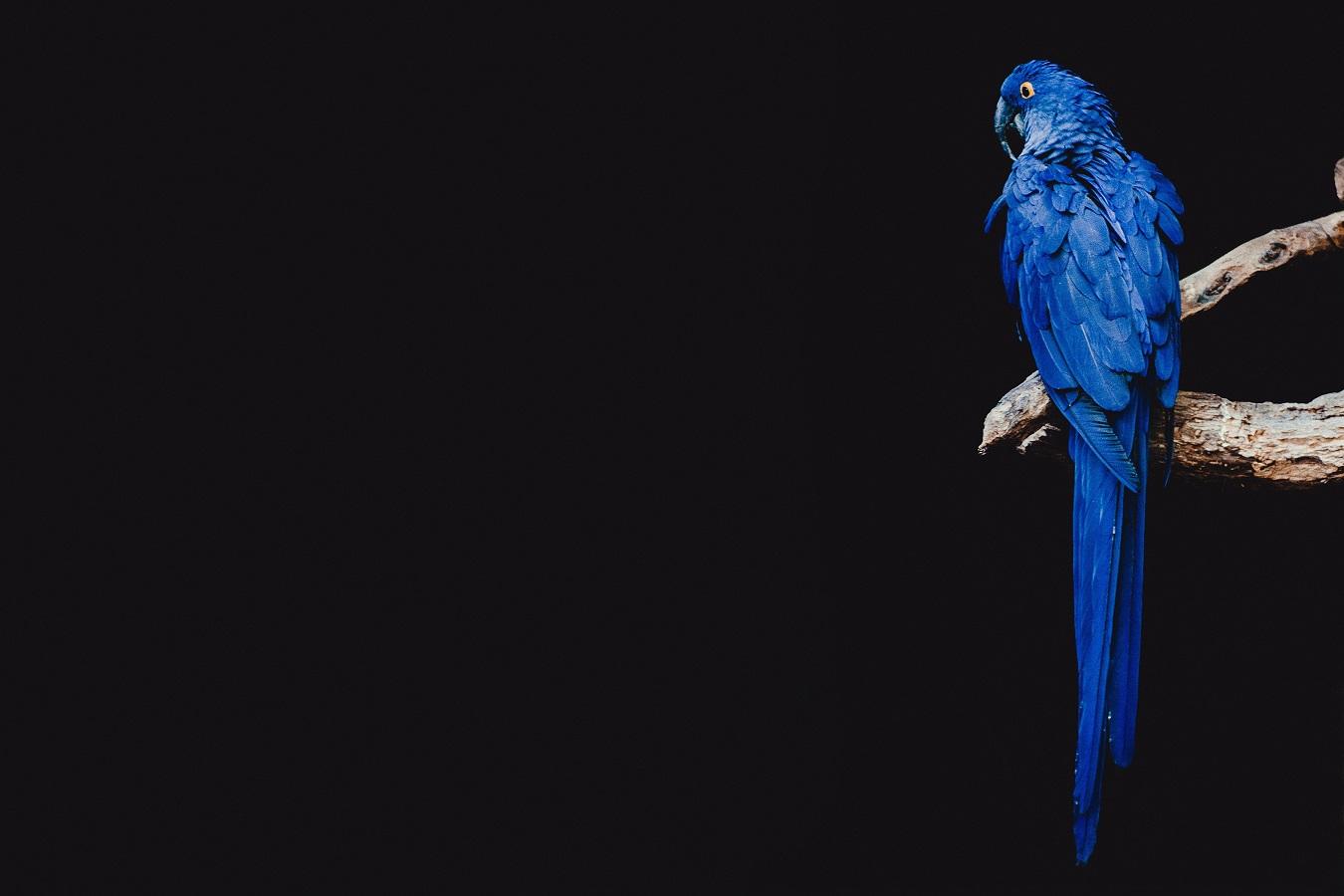 Festliches Konzert – Birdland